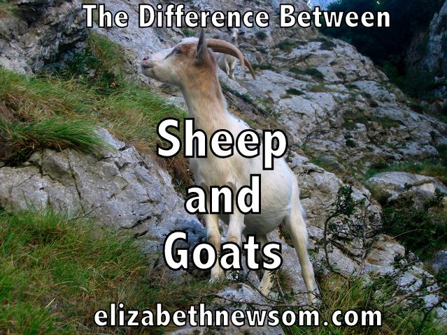 Sheep, Goats, Faith
